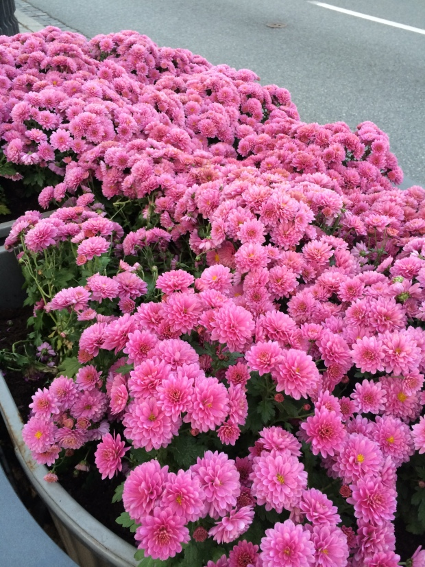 Mums for Mom